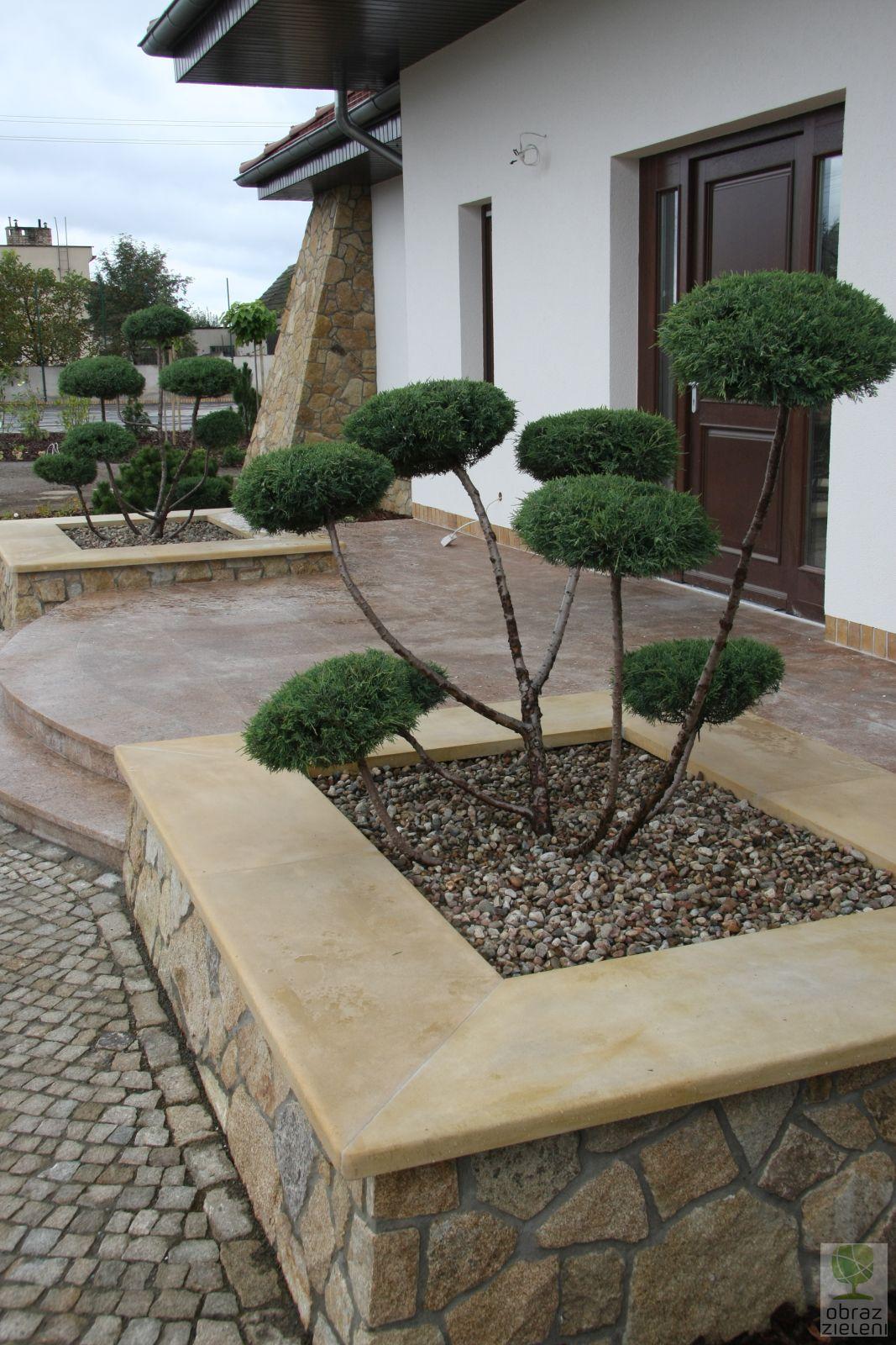 Ogród Bonsai – Jałowiec