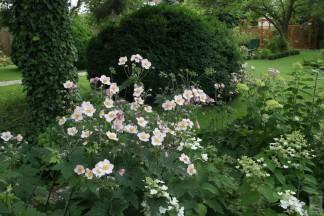 Ogród z Przeszłości – 2010