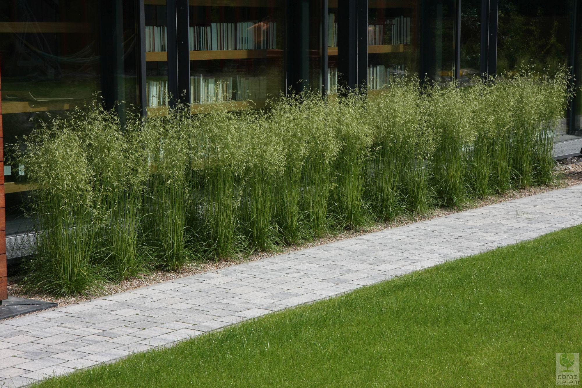 Trawy rabatowe w ogrodach