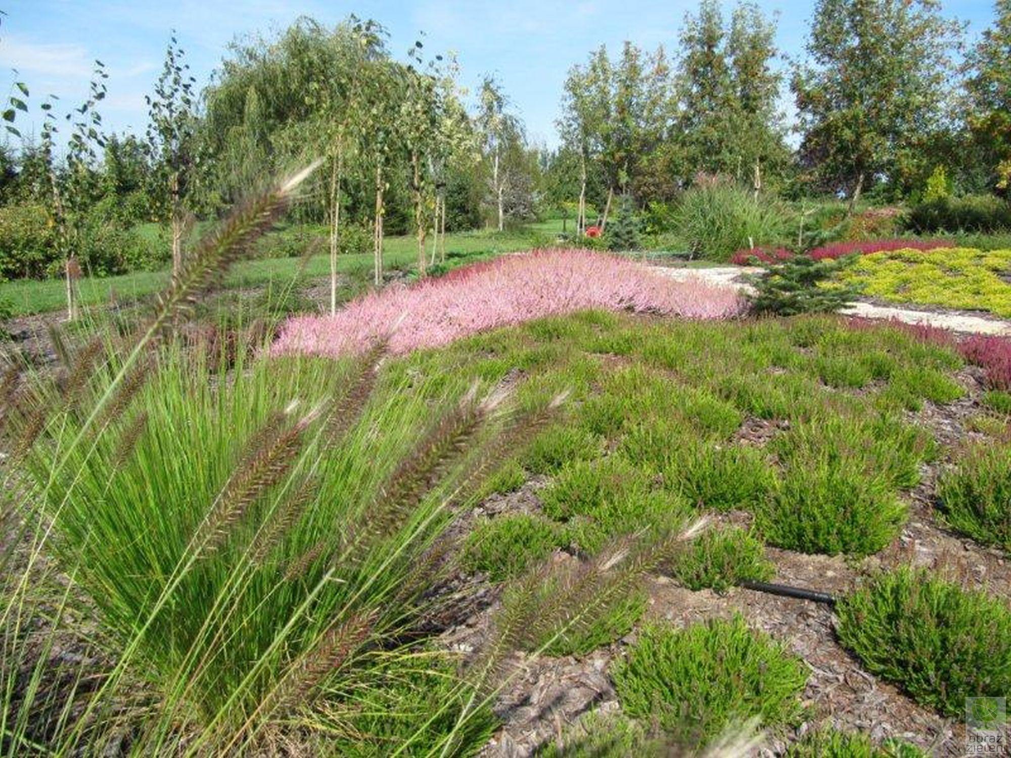 Ogród z dużym wrzosowiskiem 2011
