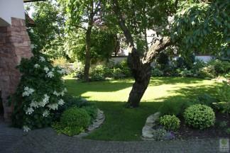 Ogród zacieniony bylinowy