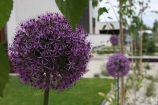 Nowoczesny ogródek regularny