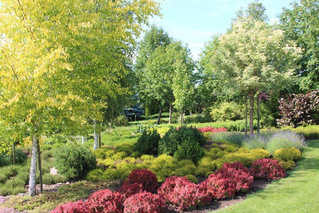 Ogród z dużym wrzosowiskiem 2015 wiosną
