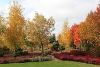 Ogród z dużym wrzosowiskiem 2015 jesienią